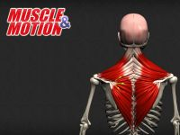 Muscle and Motion – Anatomy Education...